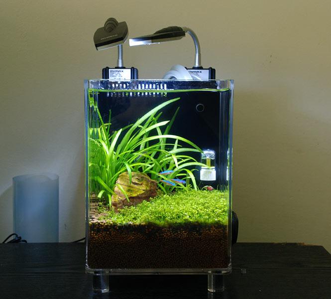 1 5 Gallon Nano Singapore Grass Scene