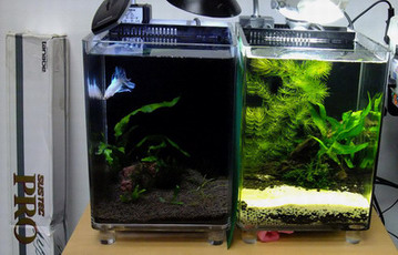 Betta In Nano Aquascape Page 2 Arofanatics Fish Talk Forums